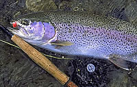 fly fishing alaska south-east