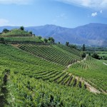 errazuriz-estate-05-max-i-vineyard-aconcagua-valley