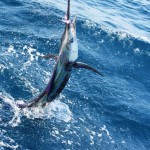 kids-club-06-sailfish-by-the-boat